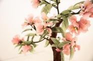 camera-il-mandorlo-dettaglio-fiori